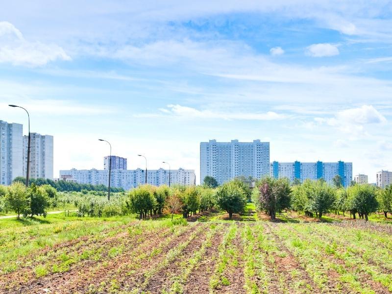 urban-gardening-stadt